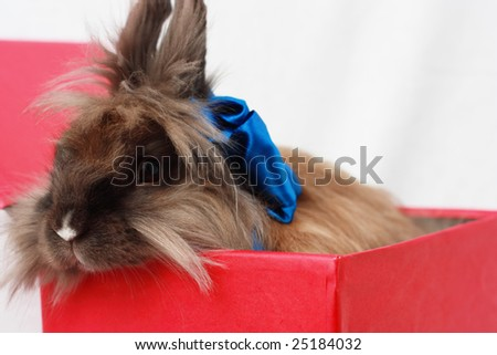 Rabbit in red box with blue ribbon - stock photo