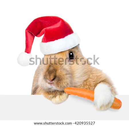 Rabbit in red santa hat eating carrot and looking over a signboard. Isolated on white background - stock photo