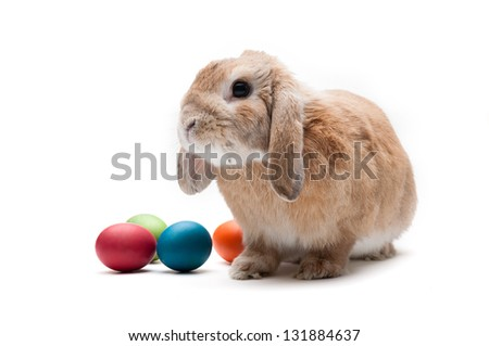 Rabbit on a white background, looking ahead, the breed of dwarf - stock photo