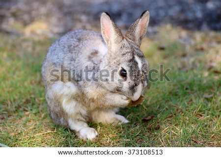 rabbit standing in green grass in summer - stock photo