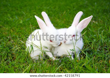 rabbit touching second rabbit at the lawn - stock photo