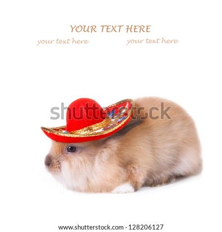 Rabbit wearing  a colorful mexican sombrero isolated on white - stock photo