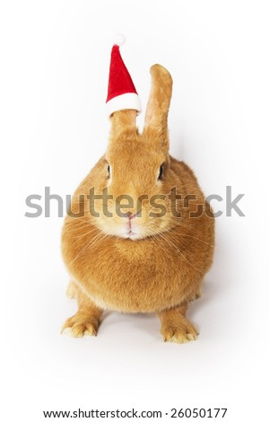 Rabbit wearing a santa hat on one ear (white background) - stock photo