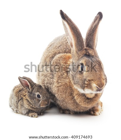 Rabbit with baby isolated on white background. - stock photo