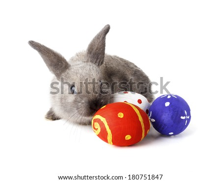 Rabbit with Easter eggs isolated on white  - stock photo