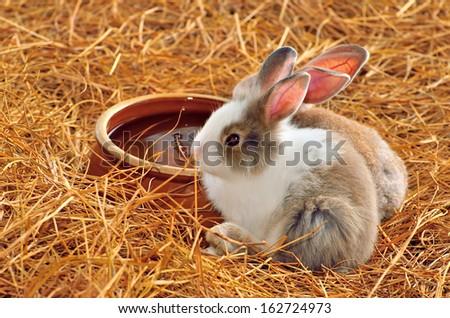 Rabbits - stock photo