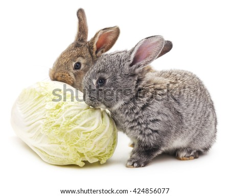 Rabbits and cabbage isolated on a white background. - stock photo
