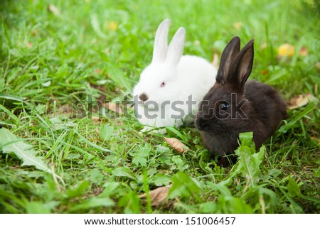 Rabbits bunny cute on the grass outdoors. - stock photo