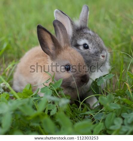 Rabbits  in grass - stock photo