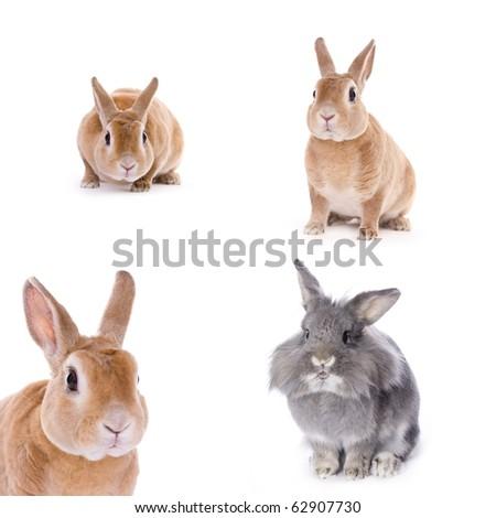 Rabbits on white background (year of rabbit) - stock photo