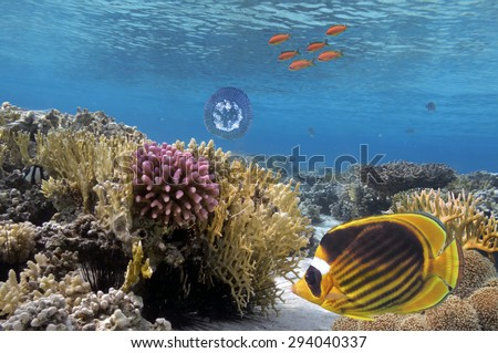 Raccoon butterfly fish with soft and hard corals - stock photo
