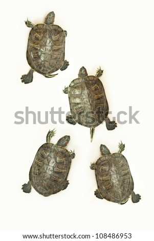 race of turtles - stock photo