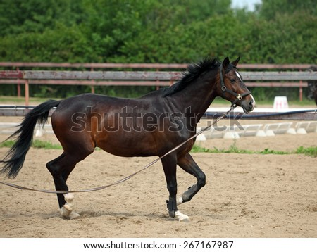 Racel horse in the paddock galloping  - stock photo