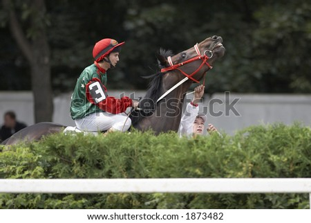 Racing horse before heat in Moscow (Russia) - stock photo