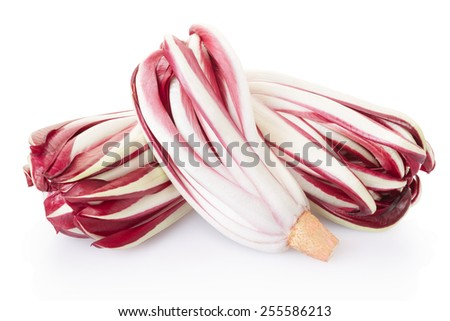 Radicchio, red italian chicory group isolated on white, clipping path included - stock photo