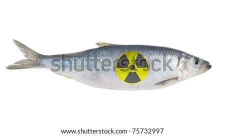 Radioactive herring fish isolated on white background - stock photo
