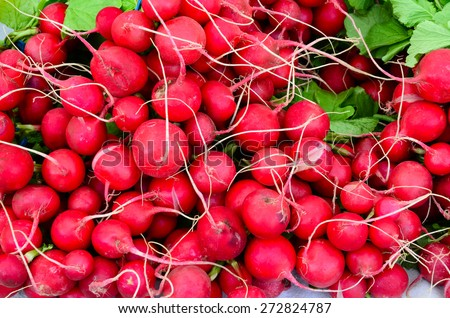 Radish bunches at Fruits and Vegetables stall in University District farmer market (aka U-district) in Seattle, WA, USA - stock photo