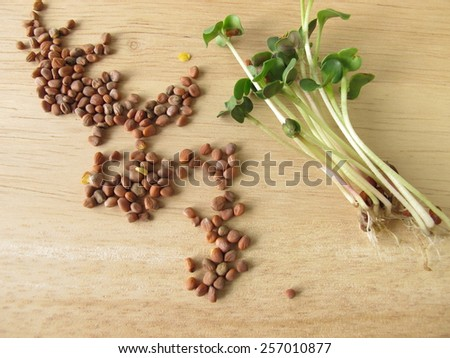 Radishes seeds and sprouts - stock photo