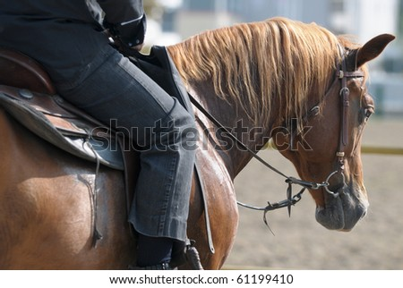 Raiding an horse - stock photo