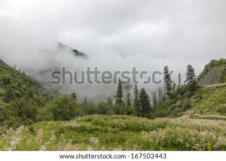 Rain clouds mountains tree - stock photo
