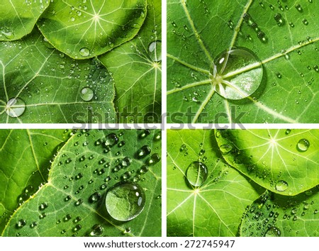 rain drops on a green leaf - stock photo