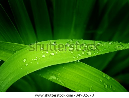 Rain drops on a green leafs - stock photo