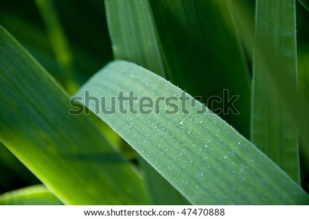 Rain drops on a leaf - stock photo
