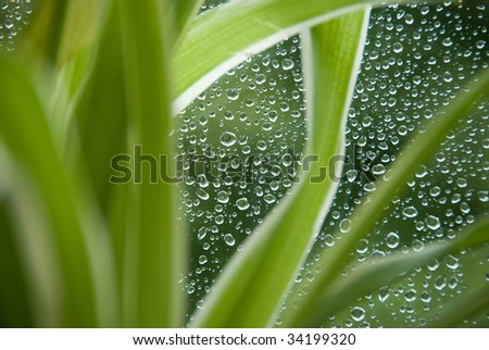Rain drops on a window glass, with un-sharpen plant in the foreground. - stock photo