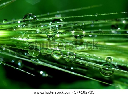 Rain drops on plant  - stock photo