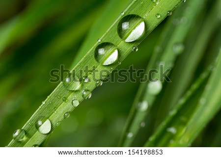 Rain Drops on small Plant after a Rainstorm Macro - stock photo
