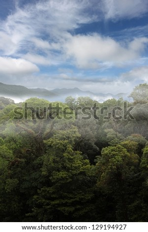 rain forest ,fog ,sky and clouds - stock photo