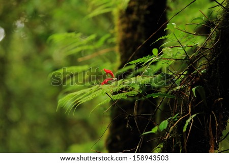 Rain forest in north of Thailand, Inthanon national park - stock photo
