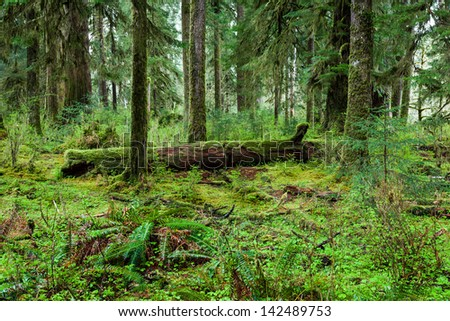 rain forest in olympic national park - stock photo