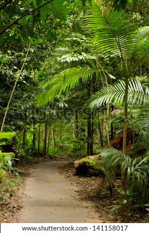 Rain forest Path 1 - stock photo