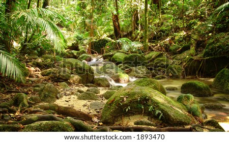 Rain forest scene - stock photo