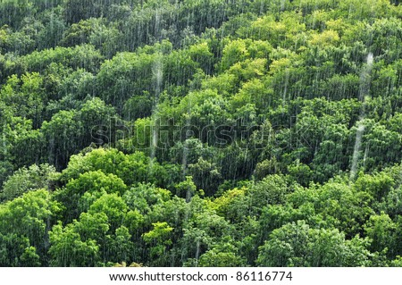 Rain in tropical forest, amazon ecosystem, nature. - stock photo
