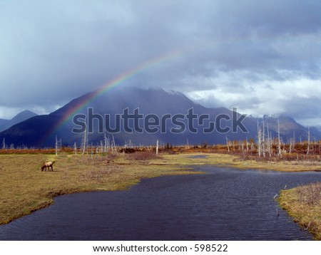 Rainbow and deer - stock photo