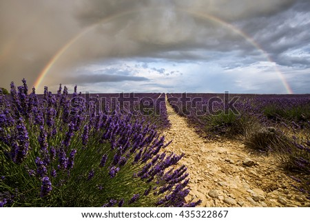 Rainbow at sunset over the lavender fields - stock photo