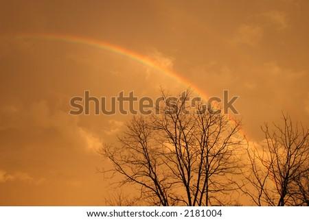 Rainbow over bare trees. - stock photo