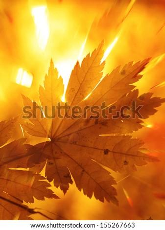 Rainbow rays, yellow maple leaf - stock photo