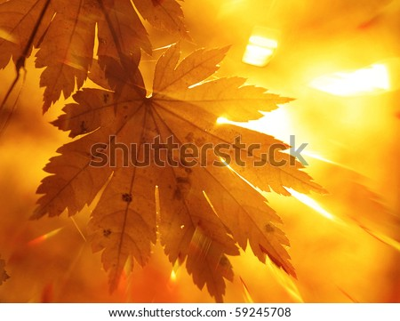 Rainbow rays, yellow maple leaf - stock photo