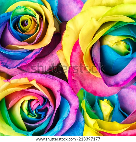 Rainbow roses flower background - stock photo