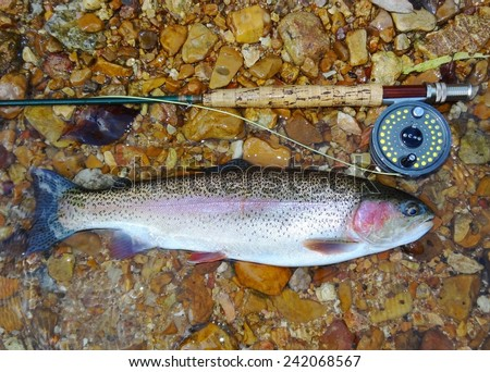 Rainbow Trout fish, fly rod or pole, and fly reel -  caught fly fishing  - stock photo