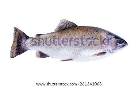 Rainbow trout (Oncorhynchus mykiss) isolated on white background - stock photo