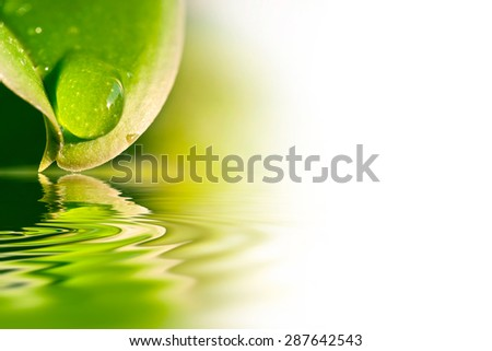 Raindrop on a leaf, water reflection and white copy space - stock photo
