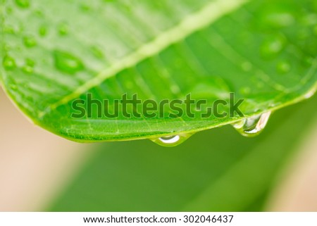 Raindrops and green leaf - stock photo
