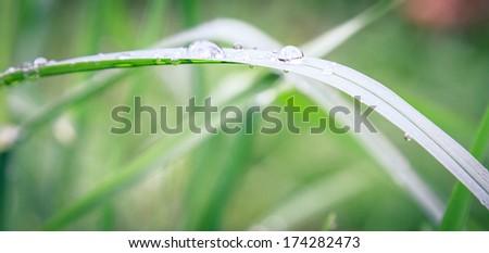 Raindrops on grass - stock photo