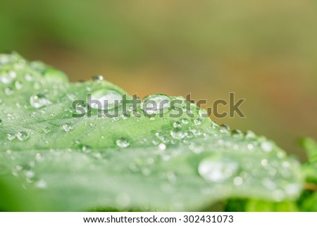 Raindrops on green leaf in rainy season - stock photo