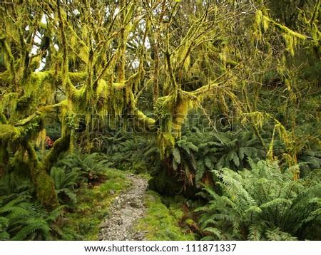 Rainforest along Milford track, New Zealand - stock photo