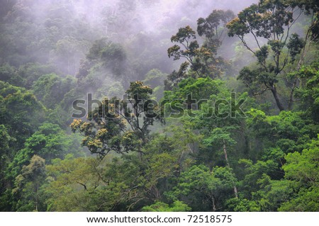 rainforest canopy at the Barron Gorge, Cairns, Queensland, Australia - stock photo